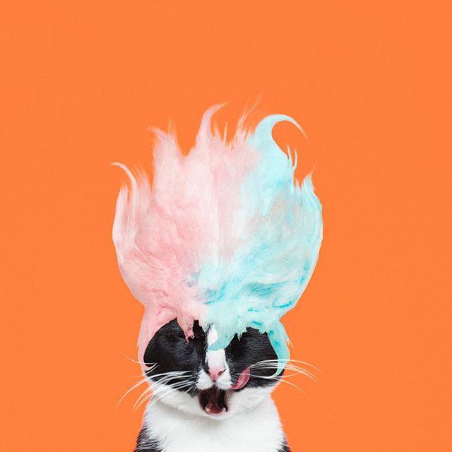 Yaratıcı bir fotoğrafçının kedisi olmak…