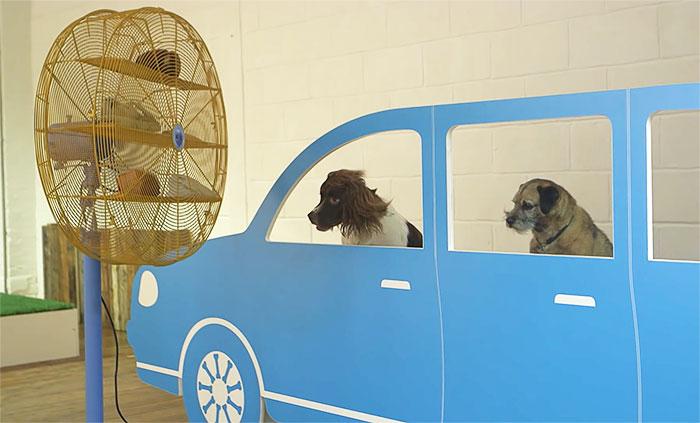 köpekler-için-dünyanın-ilk-sanat-sergisi-1