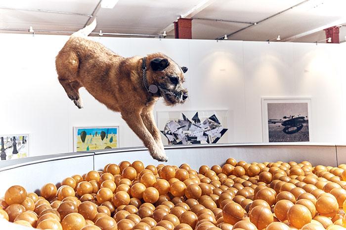 köpekler-için-dünyanın-ilk-sanat-sergisi-8