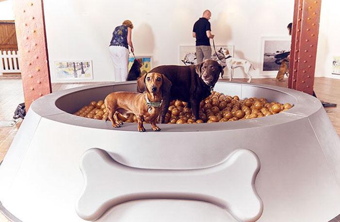 köpekler-için-dünyanın-ilk-sanat-sergisi-7