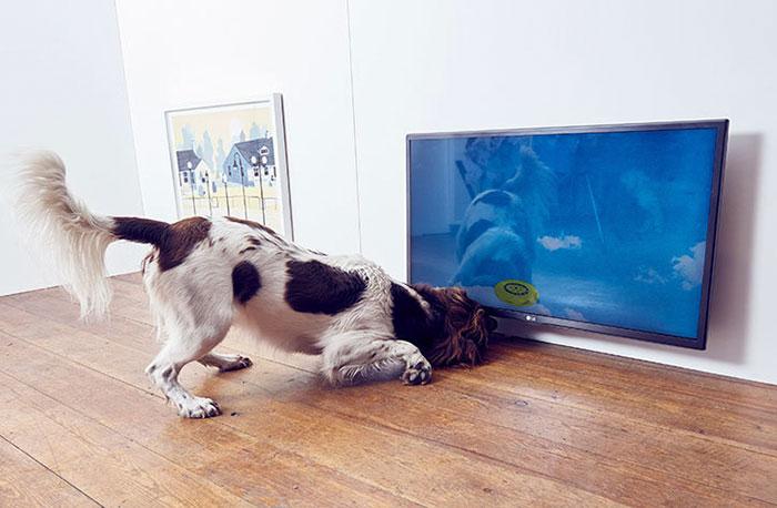 köpekler-için-dünyanın-ilk-sanat-sergisi-6