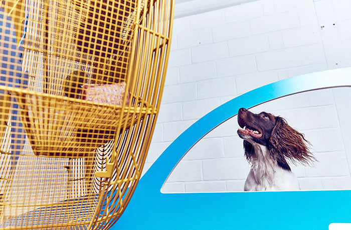 köpekler-için-dünyanın-ilk-sanat-sergisi-3