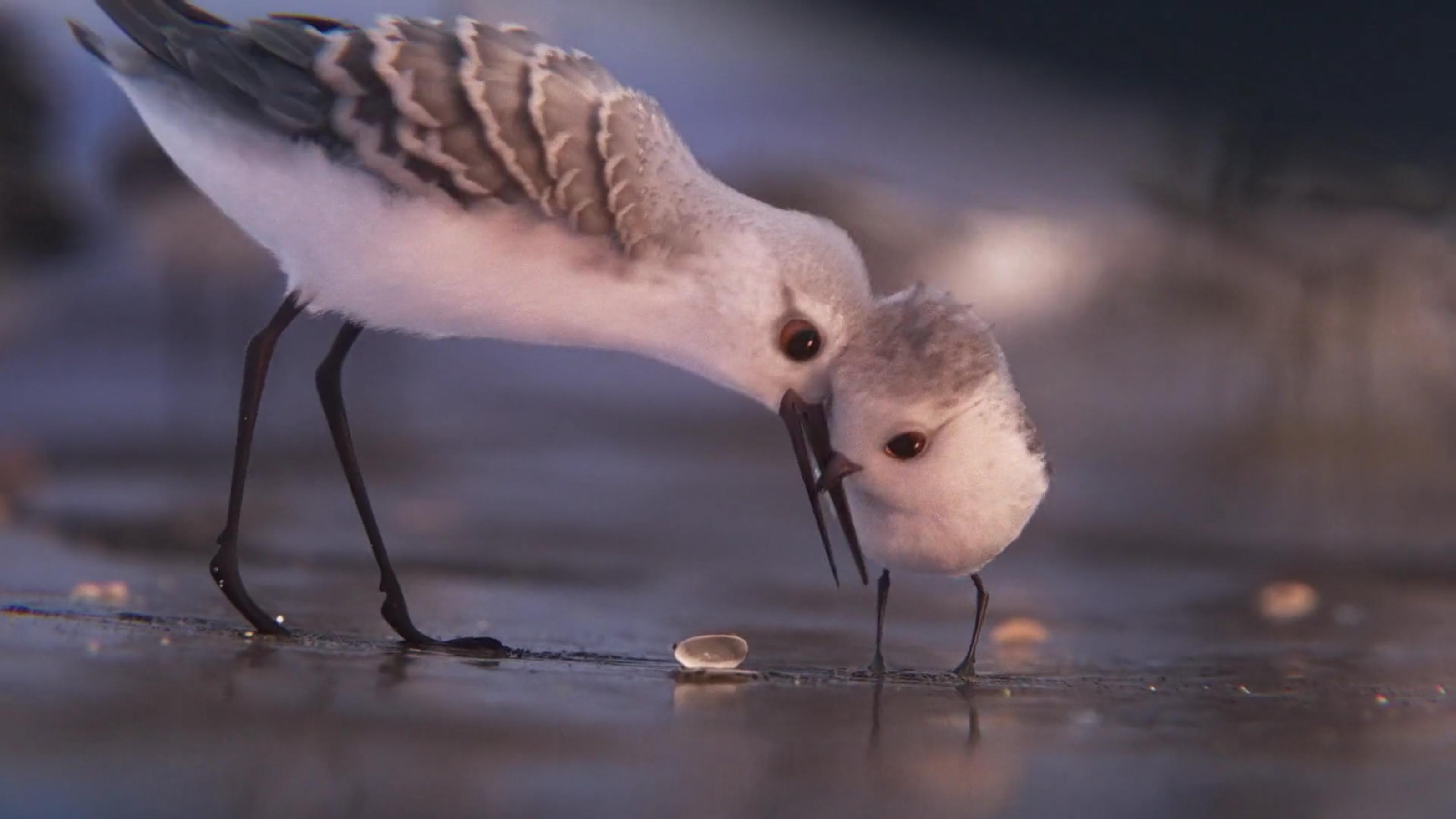 Pixar'dan yepyeni kısa film: Piper