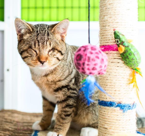 Kör kedileri sahiplendirmeyi amaçlayan proje
