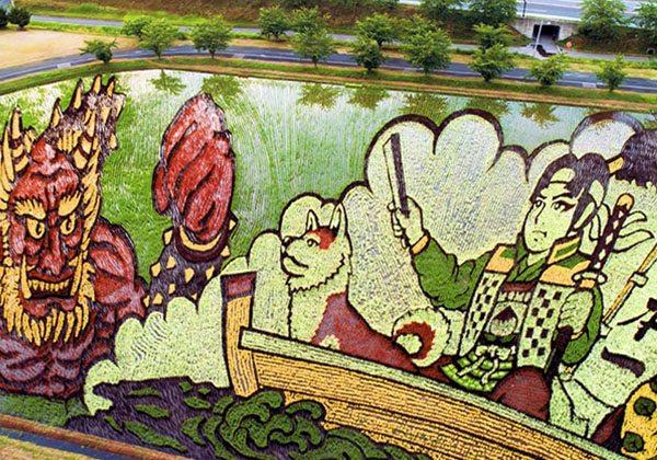Japon çiftçilerden rengarenk pirinç tarlaları