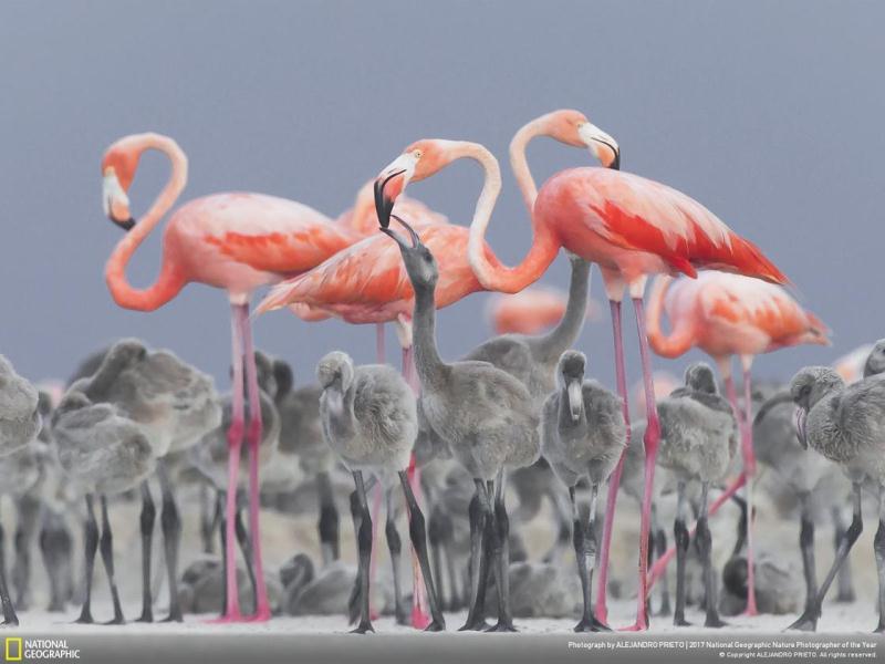 2017 National Geographic Doğa Fotoğrafçısı kazananları açıklandı