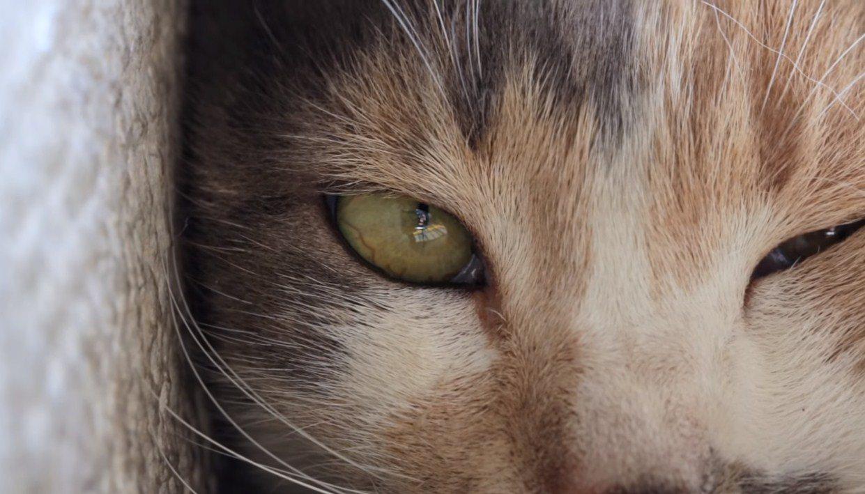 Yeni yılda bizi kedili filmler bekliyor